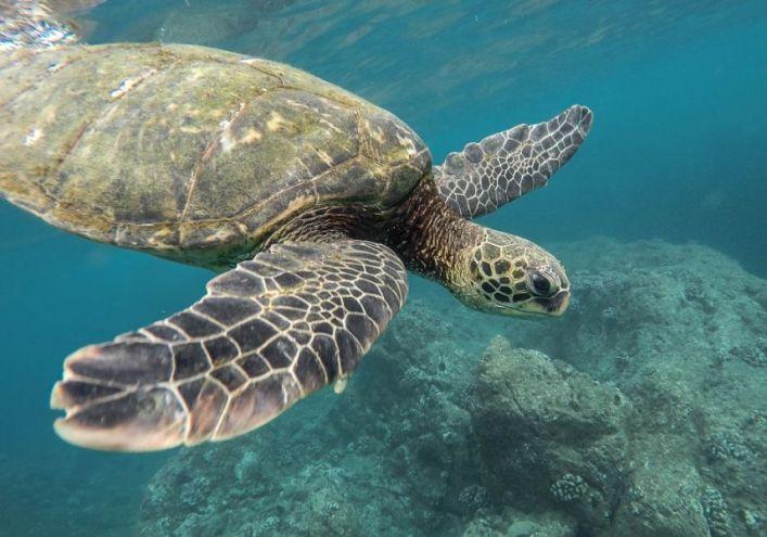 SOS tartarughe marine: Legambiente lancia Tartalove